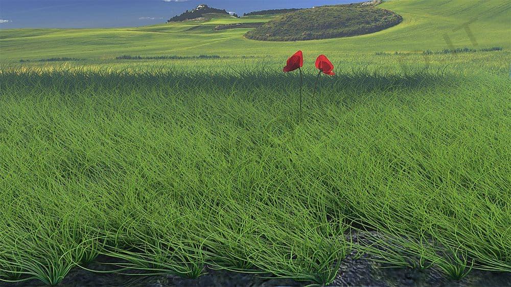 Campo di erba alta - Ambienti esterni