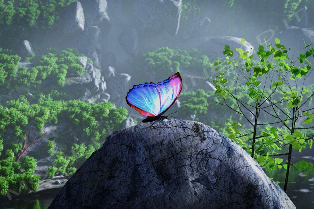 Composizione naturale farfalla