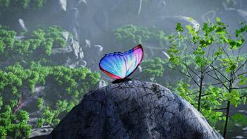 Farfalla in ambiente naturale
